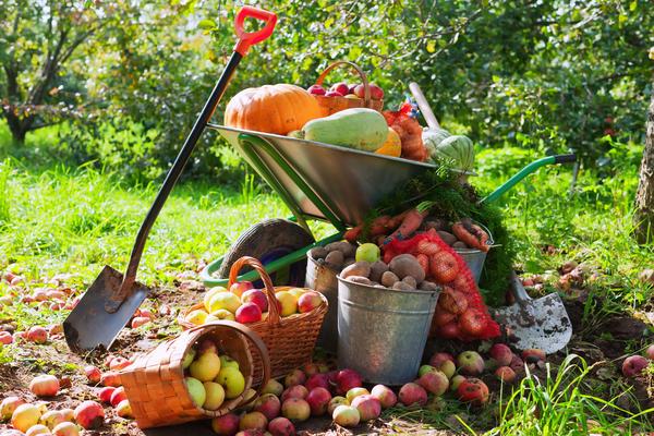 Яблочный Спас - праздник урожая