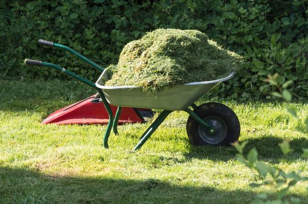 Скошенная газонная трава подойдёт для мульчирования