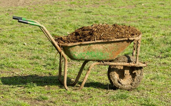 Подкормка на основе навоза - излюбленное лакомство капусты