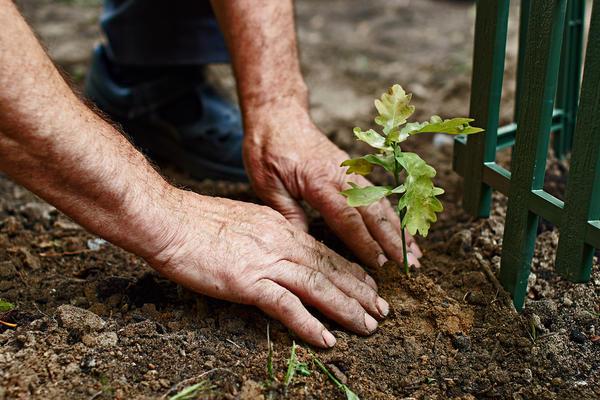 Сажайте растения, если уверены, что их рост в этом сезоне завершился