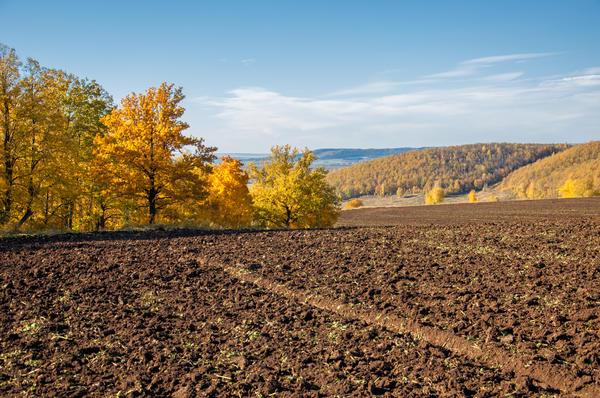 И льется чистая и теплая лазурь на отдыхающее поле…