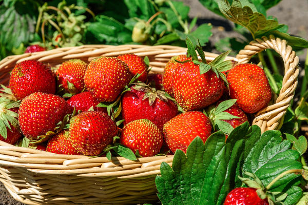 Правильно обрезанные растения дадут отменный урожай