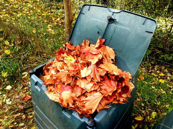 Затормозят процесс вызревания компоста листья клена, каштана и боярышника