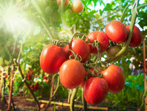 Стимуляторы плодообразования: природа и препараты