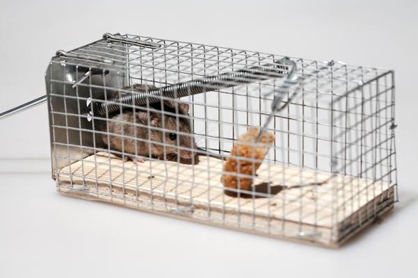 Можно воспользоваться ловушкой, которая не убивает, а отлавливает мышей