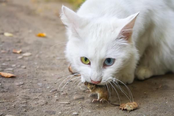 Хороший кот не пропустит ни одной мыши