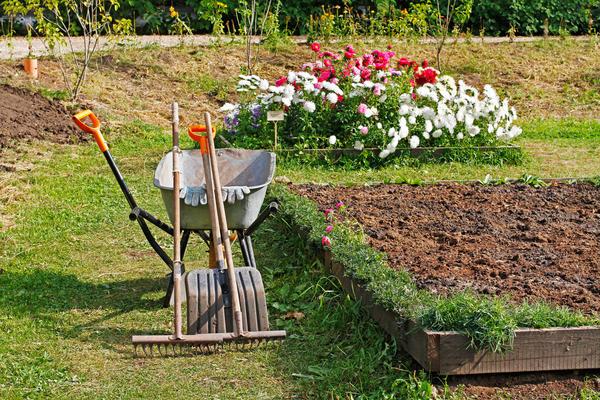 Осень. Пора навести порядок в саду