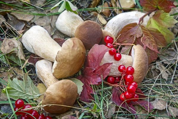 Готовим грибы - боровики и грузди, на ужин и на зиму