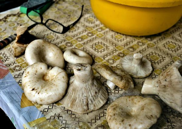 Собранные грибы необходимо тщательно очистить
