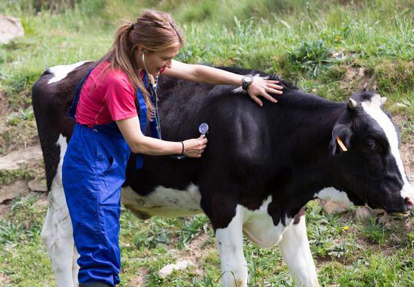 Следите за здоровьем домашних животных