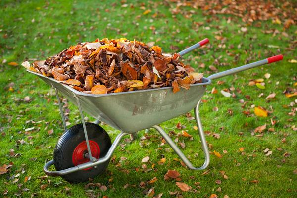 Опавшую листву нужно убрать из сада