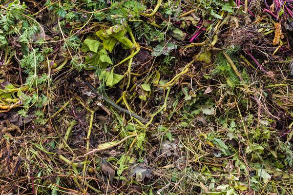 Растительные остатки без признаков болезней - ценный органический материал