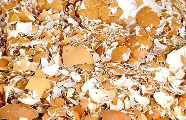 Измельченная яичная скорлупа - превосходный мульчирующий материал