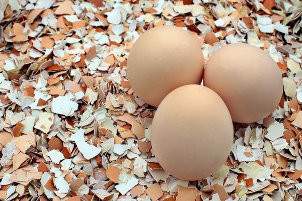 Яичная скорлупа - находка для дачника