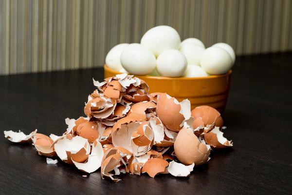 Некоторые за один присест съедают десяток яиц