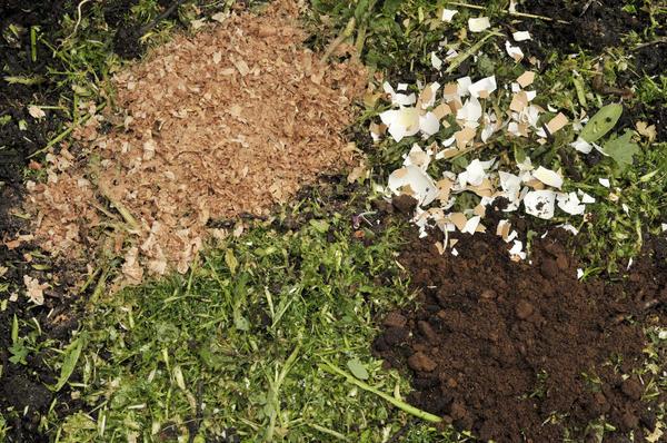 Яичную скорлупу лучше вносить в почву под осеннюю перекопку вместе с другими удобрениями