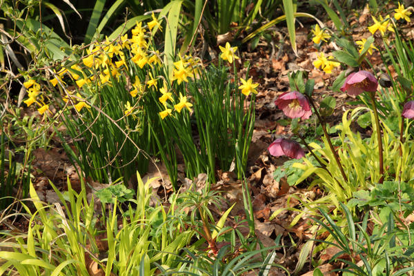 Весенние цветы под пологом деревьев