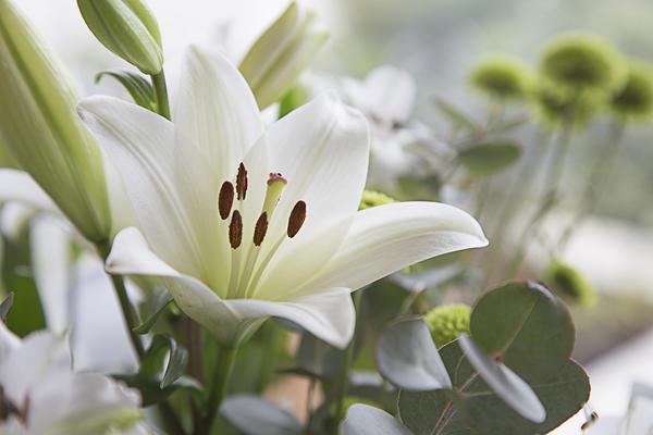 Белая лилия - символ культа Непорочной Девы
