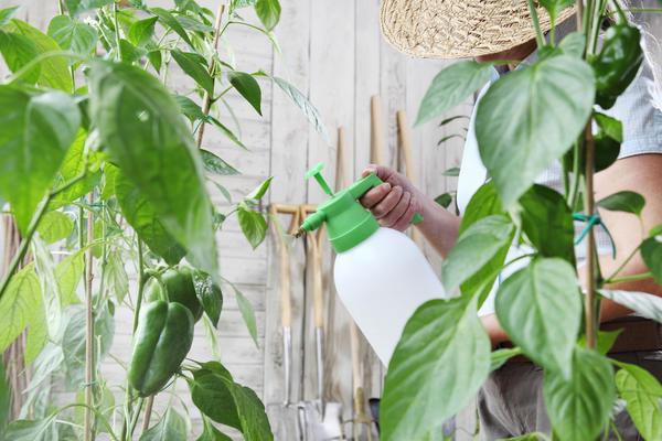Овощи и зелень, обработанные Фитовермом, можно употреблять в пищу через двое суток