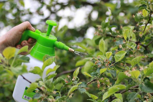 Как только начнут расти завязи, надо снова опрыскать плодовые растения