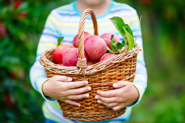 От вредителей и болезней сад можно защитить без яда