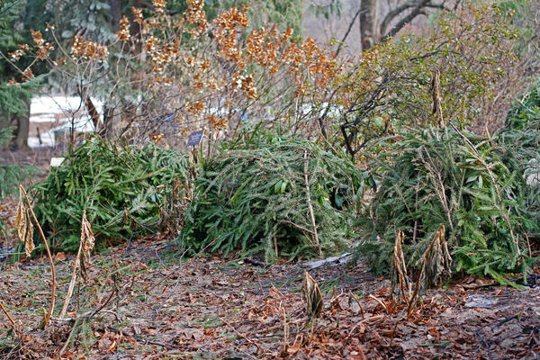 Ограничьте количество растений, требующих укрытия на зиму