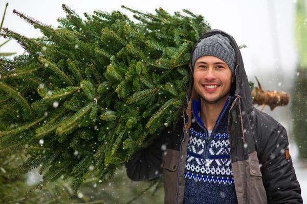 Пора задуматься об идеальном новогоднем дереве