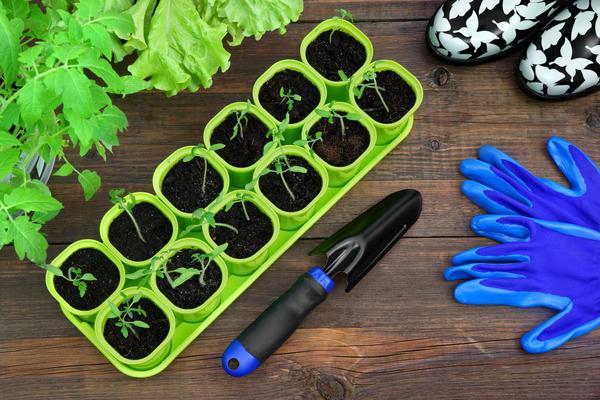 С чего начать выращивание рассады?
