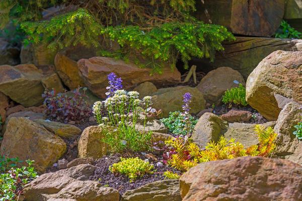 Каким будет рокарий, что в нем будет расти и цвести - каждый садовод решает сам