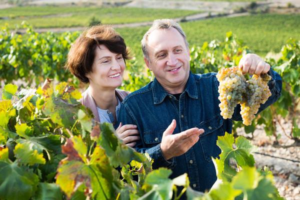 Масло и мука из виноградных косточек очень полезны женщинам и мужчинам