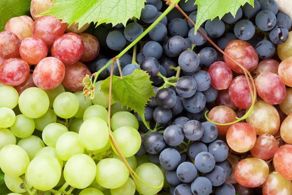 Виноградные ягоды - богатейшая палитра разнообразных цветов и оттенков