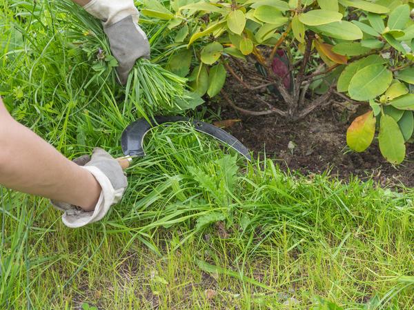 С помощью серпа удобно срезать траву или сорняки в неудобных для триммера местах
