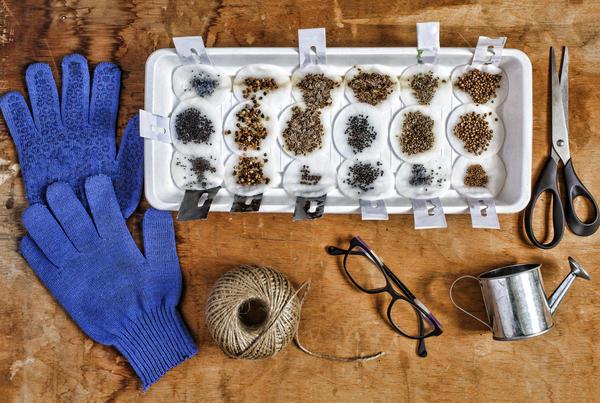 Грамотная предпосевная обработка семян - залог будущего урожая