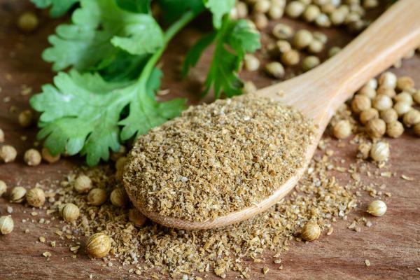Листья и семена кориандра используют и в пищевых, и в лечебных целях