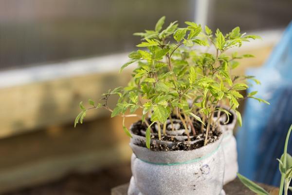 Самый компактный способ выращивания рассады