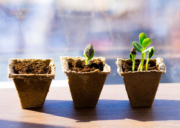 Почему семена не прорастают?