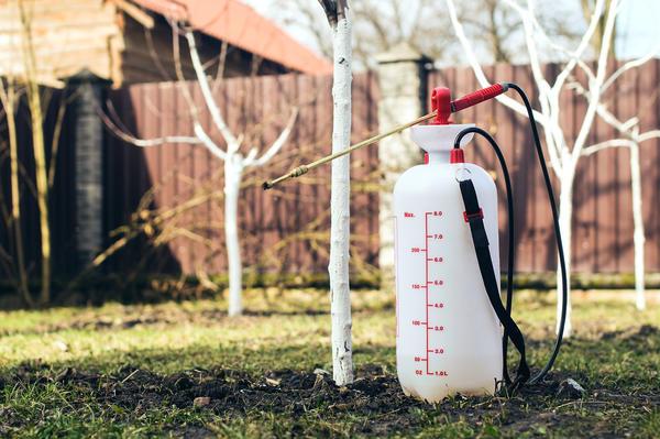 Эффективность раствора биопрепарата зависит от погоды