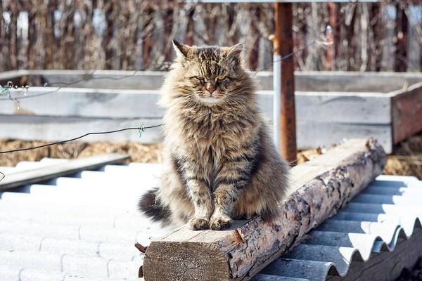 Лучшая защита от мышей - кот