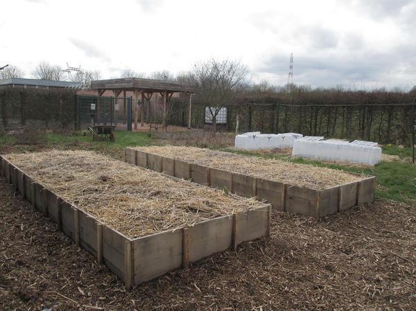 Удобно выращивать картофель под соломой в коробах