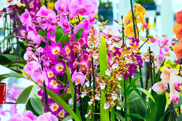 Каждый вид орхидеи требует индивидуального подхода при выращивании