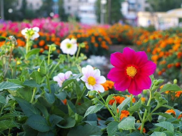 Пусть наши дворы украсят яркие клумбы!