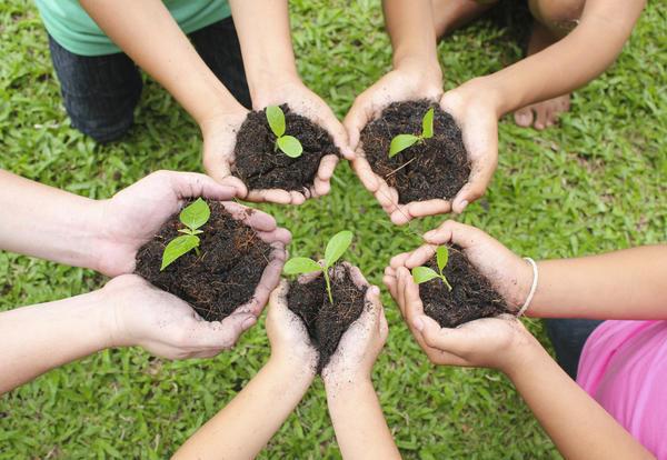 Терапевтическая сила совместного садоводства