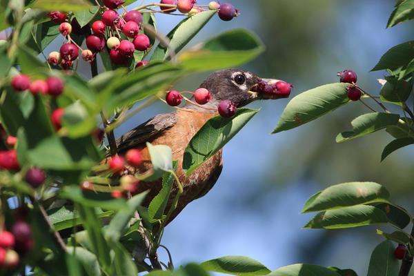 Некоторые сажают заведомо больше плодовых деревьев и кустарников