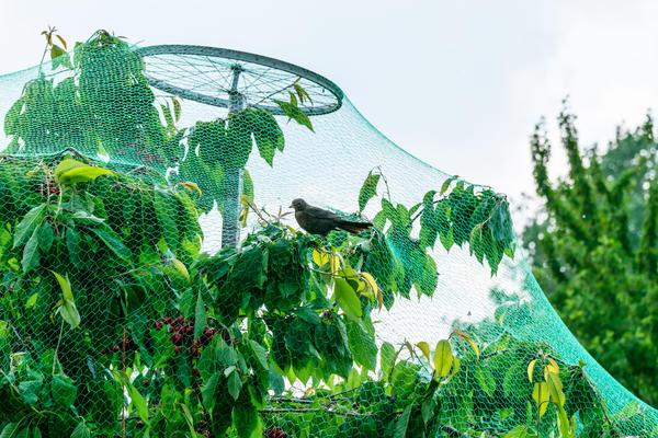 Как отпугнуть птиц от урожая