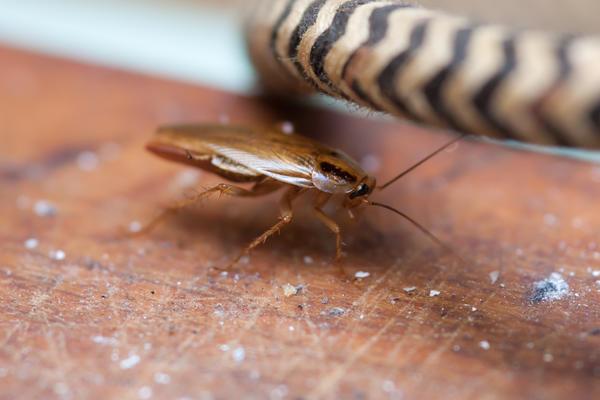 Тараканов привлекает кухня