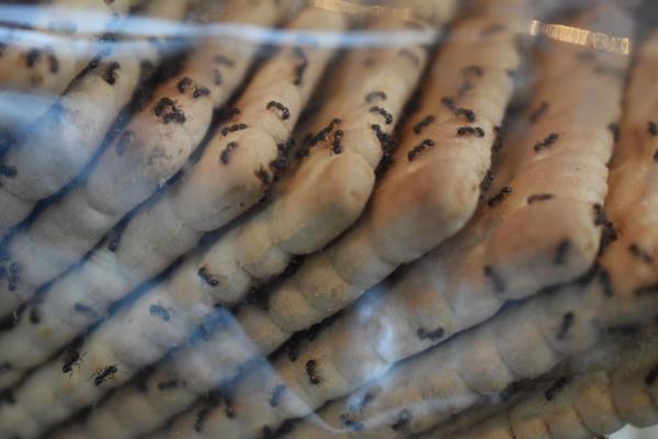 Муравьёв привлекает комфортная температура и неиссякаемый источник питания