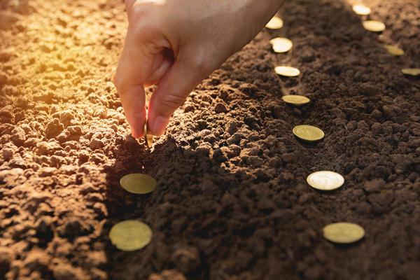 Посевной материал - одна из основных статей расходов дачника