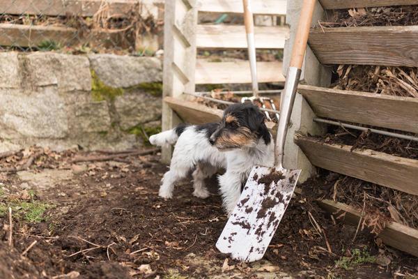 Частое перелопачивание ускоряет созревание компоста