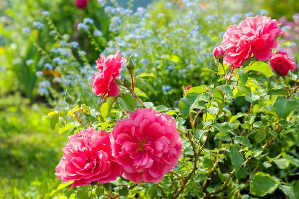 Все ли растения годятся для королевского сопровождения?