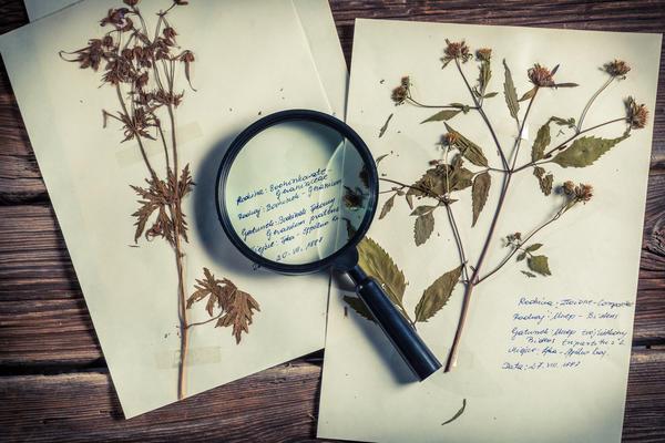 Создание гербария - увлекательное занятие